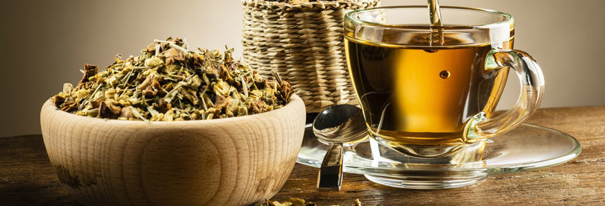 Origines du thé